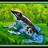 159. Dyeing Poison Dart Frog, 9x12, watercolor, nov 7, 2017.DSCN01191.jpg