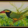 Golden-collared Toucanet, Western Amazonia. 9x12, watercolor, dec 22, 2017.