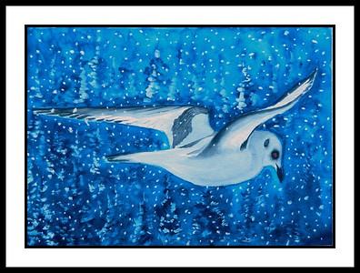 16.Ross's Gull, 11x15, watercolor, feb 2, 2017.