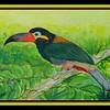 102.Guianan Toucanet – NE S America, 9x12, watercolor, aug 2, 2017.