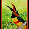 1-Chestnut-eared Aracari, 9x12, watercolor, sep 1, 2017  IMG_876711