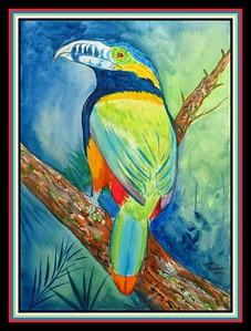 40.Spot-billed Aracari, Atlantic forest SE Brazil, E Paraguay, 9x12 watercolor & ink, april 11, 2021.
