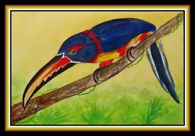 38.Collared Aracari, 6x9, watercolor & ink, april 8, 2021.