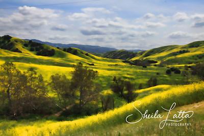 Chino Hills Springtime