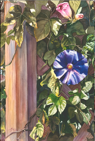 """<h2> """" Morning Glories """" <h2/> Original Watercolor on 100% Cotton Rag Paper 12""""h 18"""" w  SOLD"""