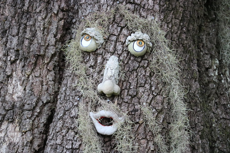 Tree Face Close up
