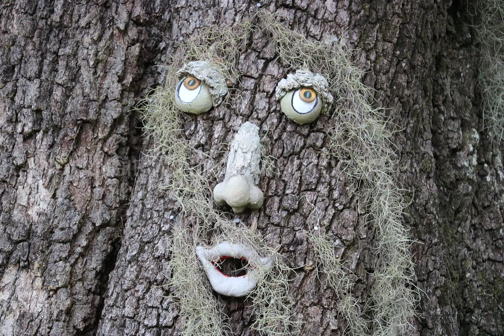 Tree Face Close up