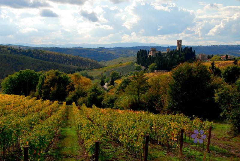 Villa Antinori Vineyards