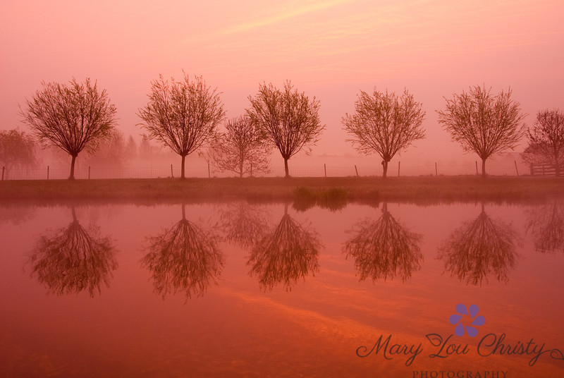 Trees at sunrise, near Hoorn in the Netherlands