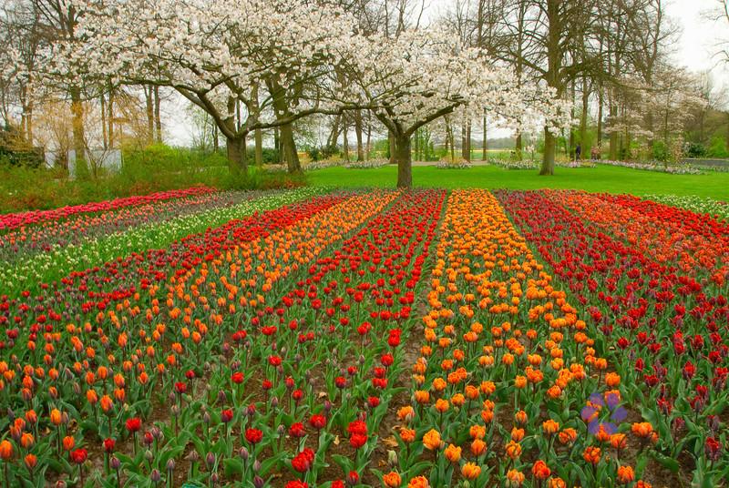 Keukenhof Gardens in April.