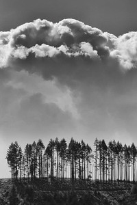 A thin strip of Douglas firs stand alone on a ridge during the start of a summer thunder storm in Oregon. OR