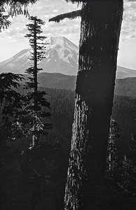 And old growth Douglas fir stands watch over Mount St. Helens near Hanaford Lake as the sun rises on September 14, 1975, four years prior to the eruption in 1980. WA