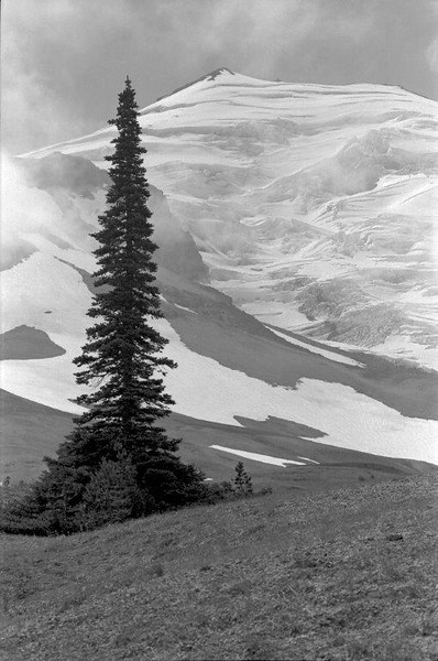 A lone alpine fir holds its place at timberline on the north face of Mount St. Helens in 1974, six years prior to the 1980 eruption. WA