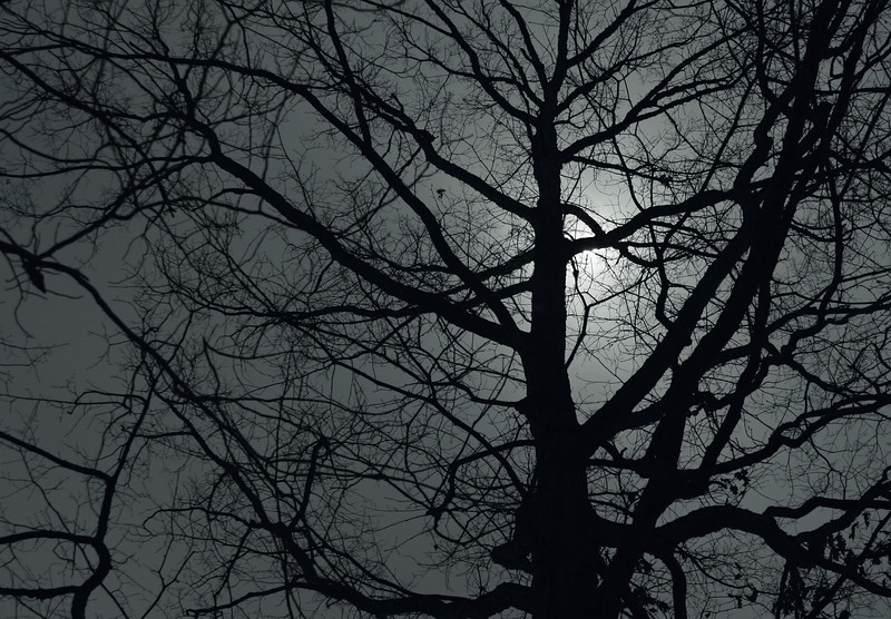 Moonlight on a Red Oak, Vestavia Hills Alabama