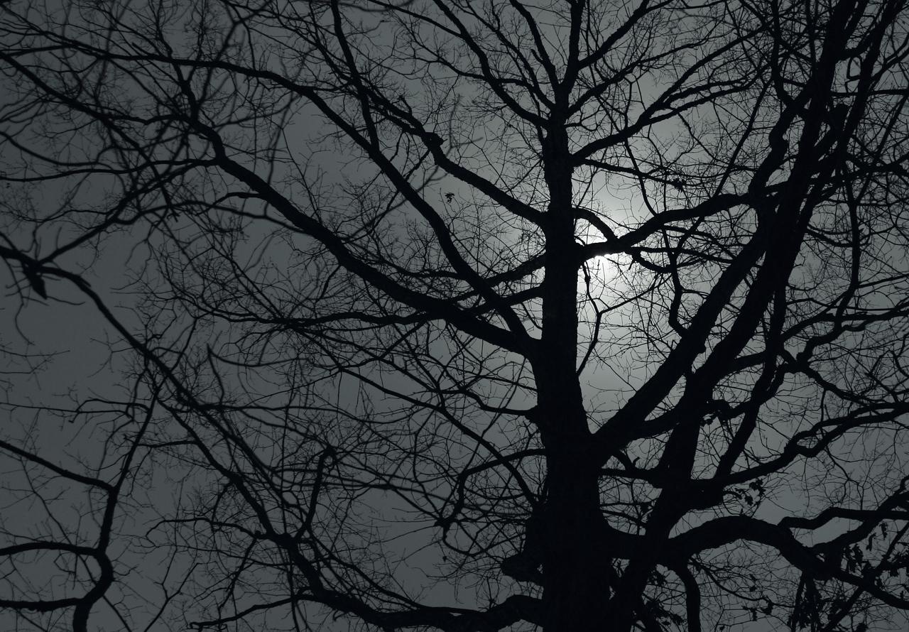Moonlight on a Red Oak, Vestavia Hills Alabama