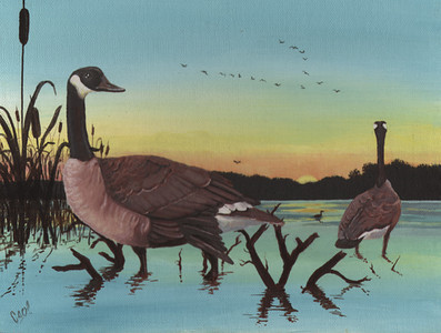 Canadian Geese At Sunset<br /> <br /> This acrylic painting was done as a submission for the U.S. Duck Stamp competition.  Though it wasn't selected that year I did enjoy painting the waterfowl.  The painting was done from reference photos and I'm looking forward to continue submitting new work in the competition.<br /> <br /> Medium:  Acrylic on Canvas Board