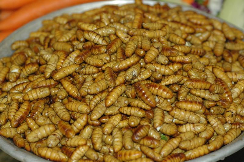 grub worms...