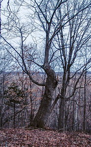 The Ent, Feb 2005