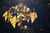 fallFoliageMacro_004_05992