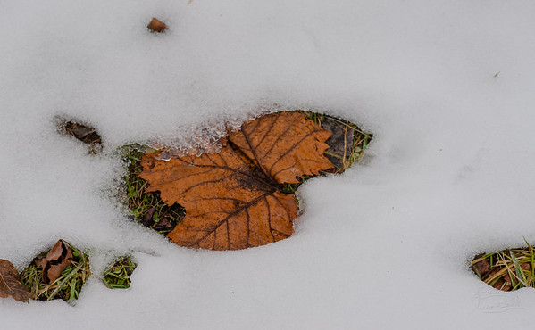 Leaf on grass in snow