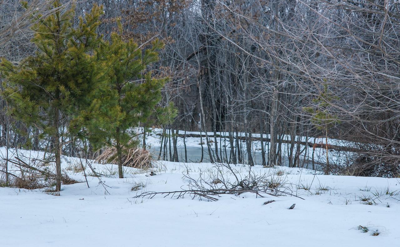 Snow on pond