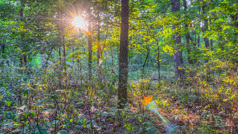 Forest as sun sets