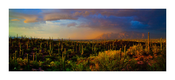 """Monsoon over the Catalinas 19""""x40"""""""