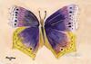Butterfly_285