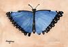 Butterfly_284