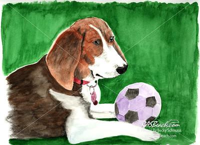 Daisy a very special Beagle.