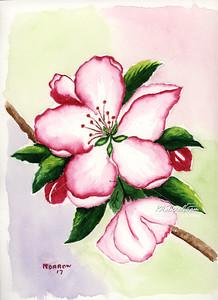 AppleBlossom_274