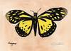Butterfly_286