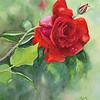 Blaze Rose