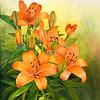 """""""Daylilies"""""""