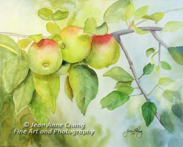 """Three Apples"" -- $175.00"