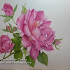 Pink Rose on Garza Papel Paper