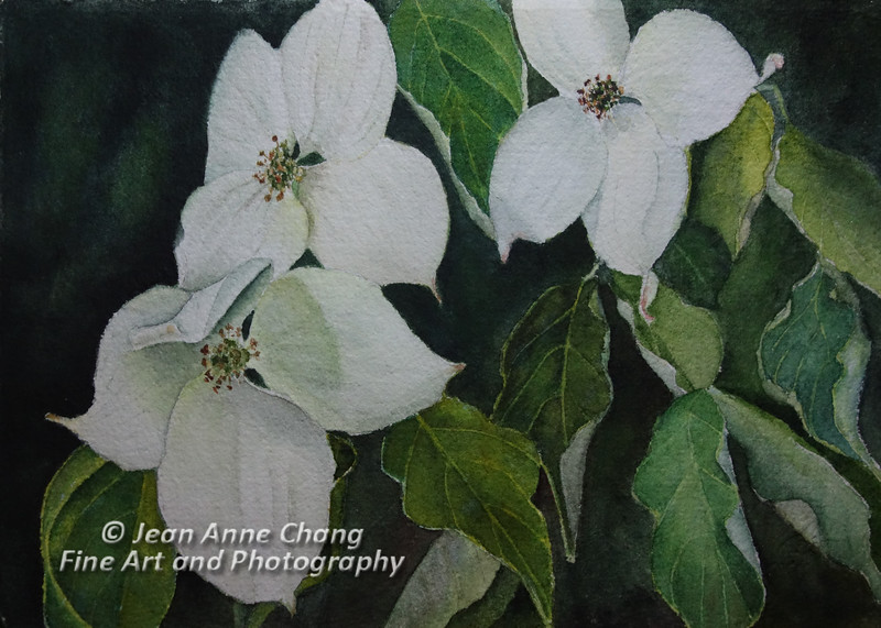 Greensleeves Dogwood