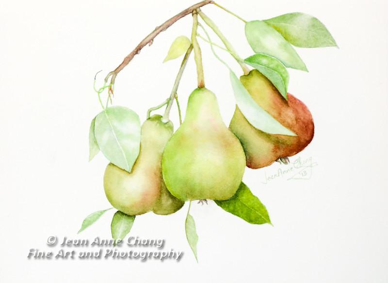 """Three Pears"""