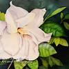 """""""Gardenia Blossom"""""""