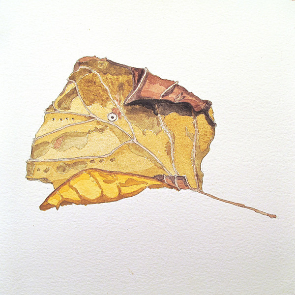 Leaf that looks like a fish