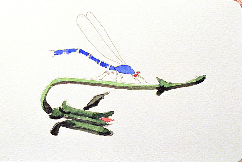 Study for a blue dragonfly