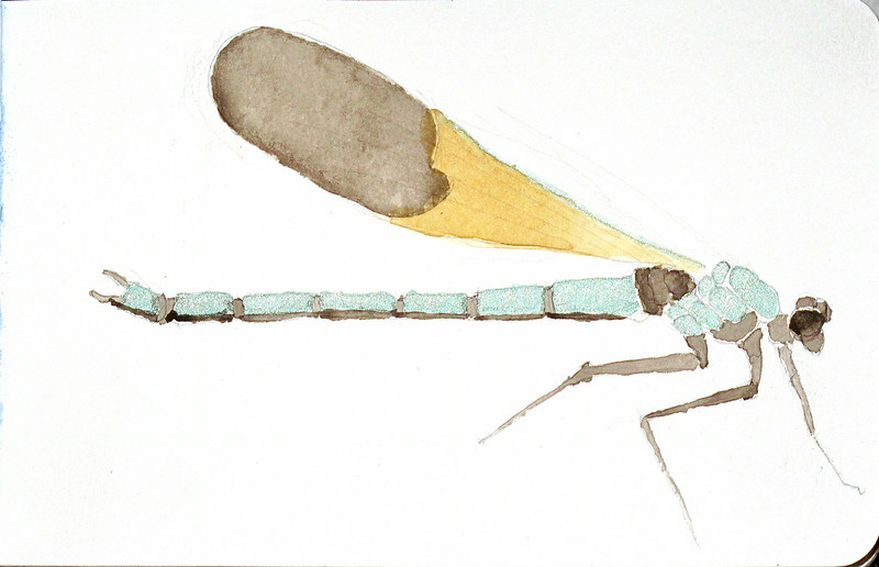 Study for a teal damselfly