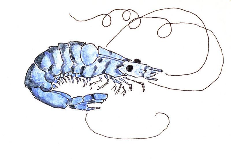 Blue Tiger Shrimp, after Hiroshige