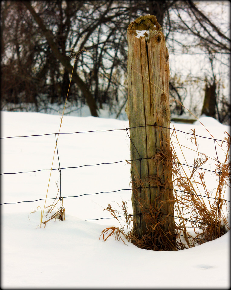 Creemore Fenceline