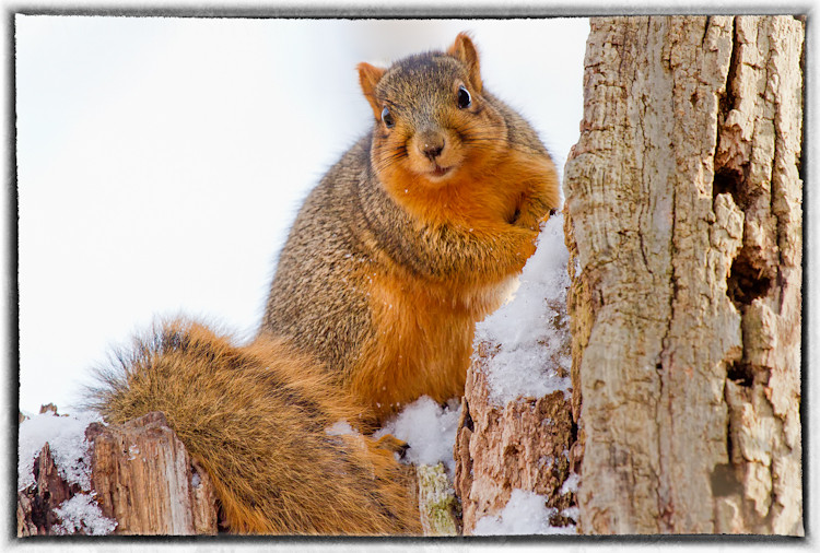 Squirrel peeking.