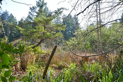 wetlands_18