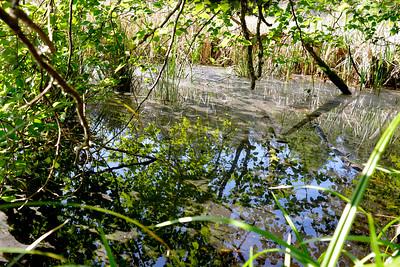 wetlands_01