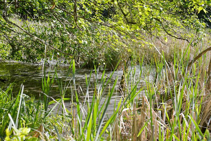 wetlands_22