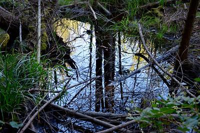wetlands_08