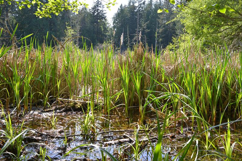 wetlands_05